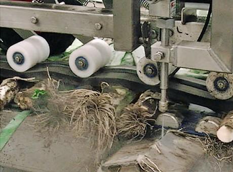 Groentensnijder met waterstralen verwerkt snel en hygiënisch