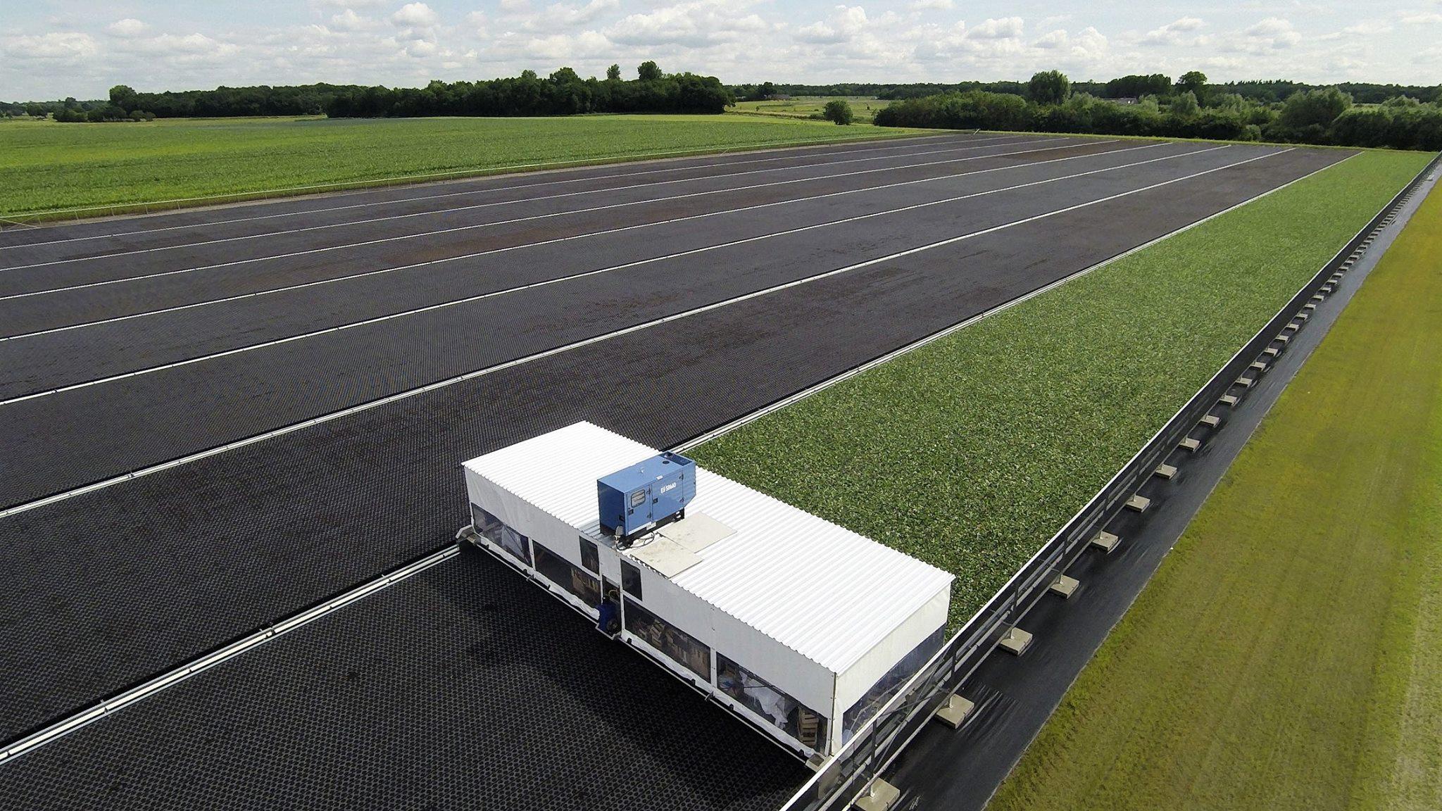 Trayveld: het nieuwe opkweeksysteem voor planten